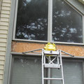 removal of rotten wood