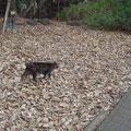 目白の森で会った猫さん