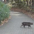 猫さんゆうゆうしてる