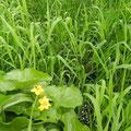 Fleurs de l'étang