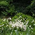 Fleurs du parc