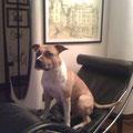 Spike si rilassa sulla sua nuova chaise longue