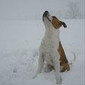 Stitch si fa domande sulla composizione della neve..