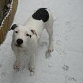 Liam nella neve