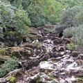Fluß bei Rijeka Crnojevica