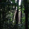 Dschungeltrail um die Arenal Lodge