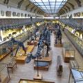 Paläontologische Sammlung