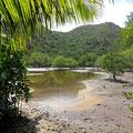 Mangrovenwald auf Curieuse Island