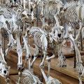 Anatomisches Museum