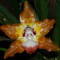 viele Orchideen gibt es in Costa Rica zu bestaunen.