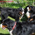 Sammy (vorne), Alvin (stehend), Alva (sitzend)
