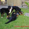 Sammy und Alix stehend, Alena und Wicki liegend
