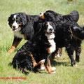Alvin, Senta und Louna