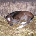 Chocoli noch ganz winzig, ca. 32 Stunden nach der Geburt.