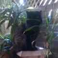lorenza-plants-balcony