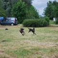 Klyde et Kiss ont fait le spectacle devant les autres chiens du club en courant partout !