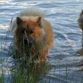 Wasser ist was Tolles - aber ohne schwimmen, wie die Mama :-)))