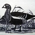 Rothalsgans nach einem Aquarell von John Gould