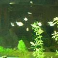 飼育魚と水草