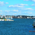 港内から魚市場を望む