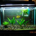 飼育魚と水草3