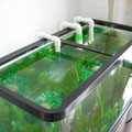 サイフォンと給水管設置1