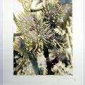 o.T. 2006. Inkjet-Print und Lithografie, Format: 48 x 33 cm