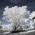 Garten mit Haus im IR-Licht, Canon EOS 1000Di, Canon EF-S 18-55mm