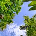 いろんな植物たちが見れた。緑色でもいっぱいいろんな色があってキレイだった。