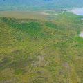 ヤラバーの熱帯雨林。まるでジャングルそのものだった。