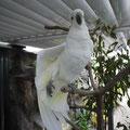 オウム。カメラを向けると羽をゆっくり広げてくれてポーズをとってくれた!