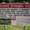刺されると大変なことになる植物があるんです。しかも日本語で説明がある!
