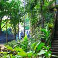 パーク内は熱帯雨林の植物がいっぱい。