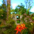オレンジの花がキレイだったのでパシャリ。