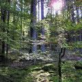 Wald im Hafenlohrtal