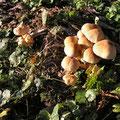 Pilze im Spesssart