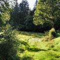 lauschiger Waldweg im Hafenlohrtal