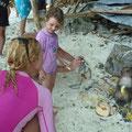 Die Affen am Monkey-Beach von Phi Phi haben alle gewichtige Gewichtsprobleme
