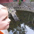 """Ausserhalb des Tempels können Schildkröten erstanden werden, die dann im Inneren in einem Teich """"frei gelassen"""" werden können. Was zur Folge hat, dass der Teich komplett mit Schildkröten überfüllt ist."""