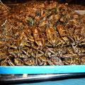 Kakerlaken gehören wenn schon auf den Tisch und nicht unter's Bett!