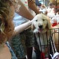 Seit dieser Begegnung weiss auch unsere Siena, dass es einem kleinen Hund nicht gut bekommt, wenn man ihn in einen Koffer stecken wuerde...