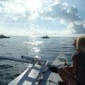 Dolphin-Hunting in den frühen Morgenstunden