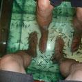 """Fish Massage: man steckt die Füsse in ein mit kleinen Fischen der Marke """"Garra Rufa"""" gefülltes Aquarium und lässt sich unter sanftem Zwicken die überflüssige Haut abknabbern..."""