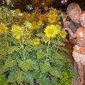 Siena entdeckt mitten in Saigon Sonnenblumen!