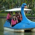 Unsere Bekanntschften beim Padeln auf dem künstlichen See des Lumpiniparks