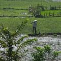 Unterwegs mit dem Zug: stundenlang nichts als kleine Reisfelder