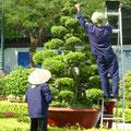 Die gepflegten öffentlichen Gärten und Parks werden von einer grossen Anzahl an Gärtnern getrimmt