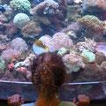 Im Aquarium von Vinepearl