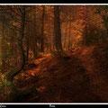 Bosc Fotografia Andreu Gual