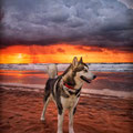 Perro en un amanecer de la playa. Fotografia Andreu Gual